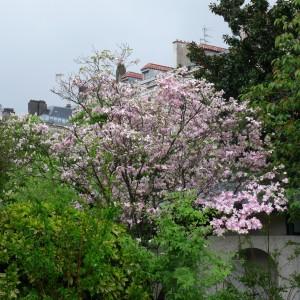 c'est quand même le printemps !