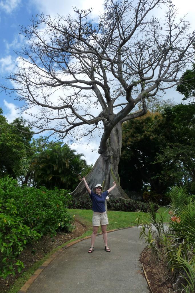 Big big tree